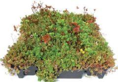 Intergard Groendak Sedum kliksysteem 45x50cm (64 stuks)