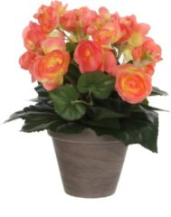 Mica Decorations - Begonia H30D25 Zalm In Pot Stan D11.5 Grey