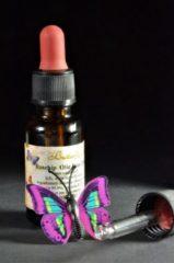 Butterfly Oil Rozenbottelolie Puur 20ml Pipetfles - Huidolie en Gezichtsolie van Rozenbottel Zaden - Rosehip