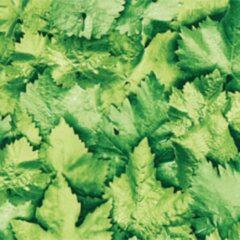 Groene Gekkofix Plakfolie - Kleeffolie - Plakplastic - Hoogwaardig - Bladeren - 45cm x 300cm