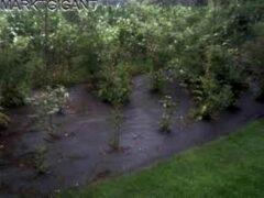 Totalflooring.nl Anti worteldoek , gronddoek , tentzeil bescherming 6 x 4.80 mtr / 130 gr p/m2