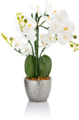 Paradessa Schmetterlings-Orchidee mit LEDs