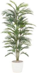 Areca-Palme Gasper Grün