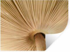 StickerSnake Muursticker Paddestoelen - Sporen van een paddenstoel - 120x90 cm - zelfklevend plakfolie - herpositioneerbare muur sticker