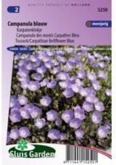 Sluis Garden Klokjesbloem Enkelbloemig Blauw (campanula)
