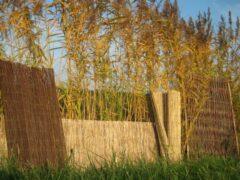 Westwood | Rietmat Tonkin | 180 x 500 cm