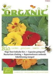 Buzzy Organic Oost-Indische kers hoge gemengd (Skal 14725)