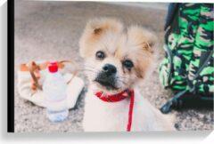 KuijsFotoprint Canvas - Puppy met Rode Halsband en Groene Tas - 60x40cm Foto op Canvas Schilderij (Wanddecoratie op Canvas)