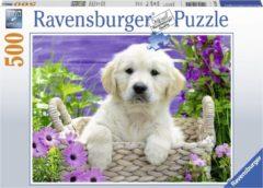 Ravensburger puzzel Lieve Golden Retriever - legpuzzel - 500 stukjes