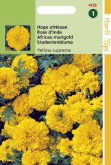 Gele Buzzy Seeds Hortitops Zaden - Afrikaantje Yellow Supreme (Tagetes erecta)