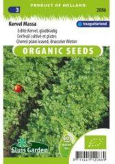 Groene Sluis Garden - Kervel Massa Biologisch (Anthriscus cerefolium)