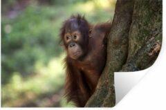 StickerSnake Muursticker Baby Dieren - Baby orang oetan - 60x40 cm - zelfklevend plakfolie - herpositioneerbare muur sticker
