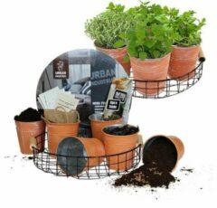 Groene Urban Industrial Herbs zwarte draadmand met 6 terracottalook potjes en 6 kruiden | Moestuin | Grow your own | Baltus