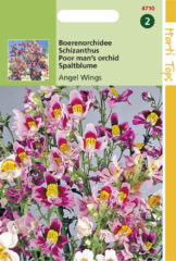 Buzzy Seeds Hortitops Zaden - Schizanthus Wisetonensis Angel Wings
