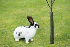 Nature Boombeschermers - Klim-En Geleide Artikel - 6x6x55 cm Zwart 4 stuks