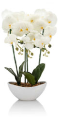 Cottage Dreams LED-Orchidee 48 cm hoch