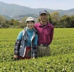 Marimo EGCG: Kafun Catechine (antioxidant) van familie Morimoto (Bio) 4 x 50 gr.