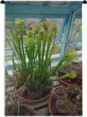 Blauwe 1001Tapestries Wandkleed Tropische Bekerplanten - Vleesetende Tropische Bekerplanten in een bloempot Wandkleed katoen 60x90 cm - Wandtapijt met foto
