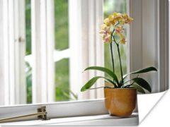 PosterMonkey De orchideeën in een bloempot voor het raam poster 80x60 cm - Foto print op Poster (wanddecoratie woonkamer / slaapkamer)