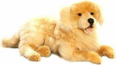 Bruine Bicolini Knuffelhond Liggende Golden Retriever 60 Cm