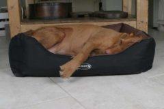 Bruine Hondenmand En Kattenmand Expedition - Bruin - Maat Chihuahua 42cm - Scruffs
