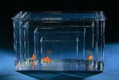 Transparante Savic Plastic aquarium - XL - 40,5 x 25,7 x 22 cm - 22L
