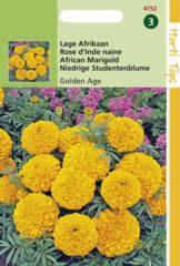 Gele Buzzy Seeds Hortitops Zaden - Tagetes Erecta Nana Golden Age