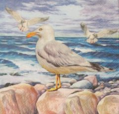 Ambie Servetten Seagulls on Rocks 33 x 33 cm
