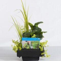 Moerings waterplanten Mix waterplanten op drijvend planteneiland - 2 stuks