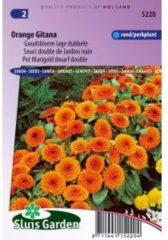 Oranje Sluis Garden Goudsbloem Orange Gitana (Calendula officinalis)