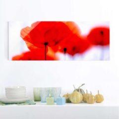 PPS. Imaging Glasbild - Magic Poppies - Panorama Quer - Blumenbild... 40cm x 100cm