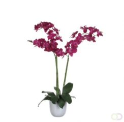 Edelman Dinxperlo Mica Decorations phalaenopsis paars in pot tusca wit d14,5 maat in cm: 100 x 53 PAARS