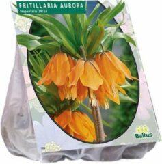 Baltus Fritillaria Imperialis Aurora - 2 x 3 stuks