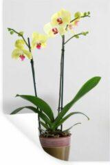 StickerSnake Muursticker Orchideeën - De gele orchideeën in een bloempot - 60x90 cm - zelfklevend plakfolie - herpositioneerbare muur sticker