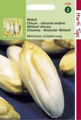 Merkloos / Sans marque Hortitops Zaden - Brusselse Witlof Mechelse Middenvroeg