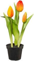 3er Set Tulpen in Topf Gasper Orange