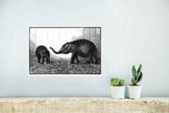 PosterMonkey Een gedetailleerde illustratie van baby olifanten poster 40x30 cm - klein - Foto print op Poster (wanddecoratie woonkamer / slaapkamer) / Wilde dieren Poster