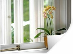 StickerSnake Muursticker Orchideeën - De orchideeën in een bloempot voor het raam - 120x90 cm - zelfklevend plakfolie - herpositioneerbare muur sticker