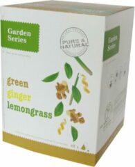Groene Thee met Citroengras en Gember - groen Tea Lemongrass Ginger - Garden Series Box (48 piramidebuiltjes)