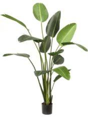 Groene Cozy Ibiza Kunstplant Strelitzia (230 cm)