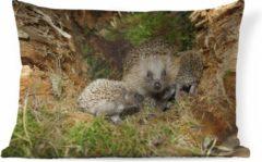 PillowMonkey Sierkussen Egel voor binnen - Baby egels in de natuur - 60x40 cm - rechthoekig binnenkussen van katoen