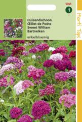 Rode Buzzy Seeds Hortitops Zaden - Dianthus Barbatus Enkelbloemig Gemengd