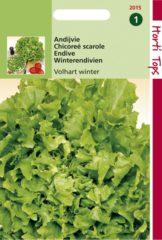 Groene Hortitops Zaden - Andijvie Breedblad Volhart Winter