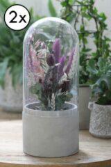 Licht-grijze AllHomeDecorations 2x Bloempot met Glazen Stolp voor Binnen - Bloemen & Planten - Ø12 h.29,5 cm