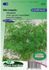 Groene Sluis Garden - Dille Compatto (Anethum graveolens)