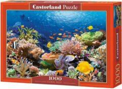 Castorland legpuzzel Coral Reef Fishes 1000 stukjes