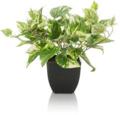 Fleurange Kunst-Pothos im Blumentopf