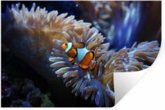 StickerSnake Muursticker Clown vis - Een Nemo-vis zwemmend in een aquarium - 90x60 cm - zelfklevend plakfolie - herpositioneerbare muur sticker