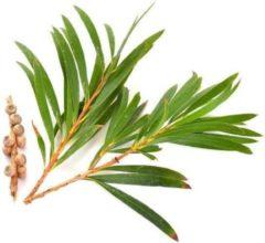 Teatree Bloemen water 300 ml | Tea tree Hydrolaat | 100% Puur | Biologisch | Roomspray | Bodyspray | Gezichtstonic | Gezichtsreiniging tonic | Huidverzorging | Pure Naturals