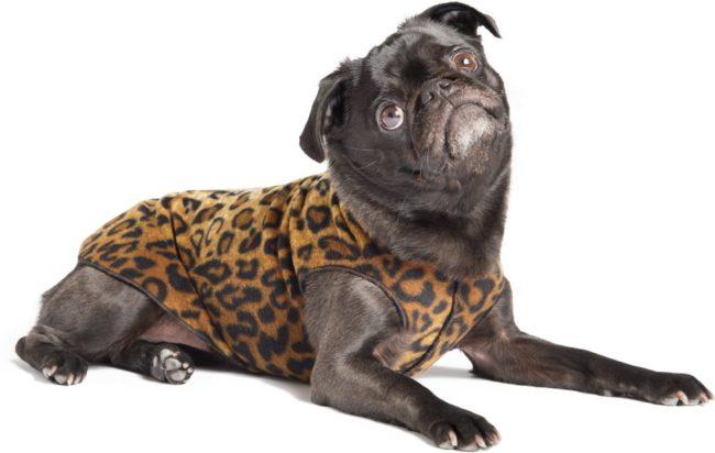 Afbeelding van GoldPaw Series Goldpaw - Stretch Fleece hondenjas - Pullover Luipaard - maat 24 - grote maten